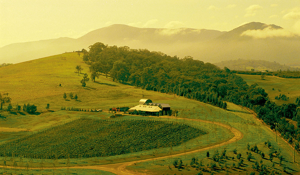 beautiful winery of yarra valley