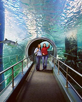 melbourne aquarium Australia