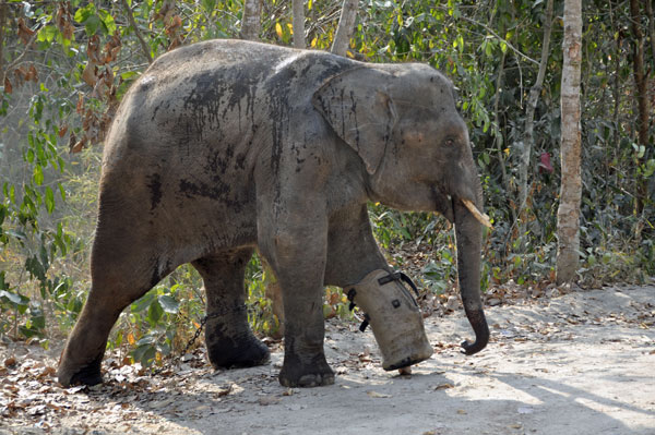 wildlife center phnom penh