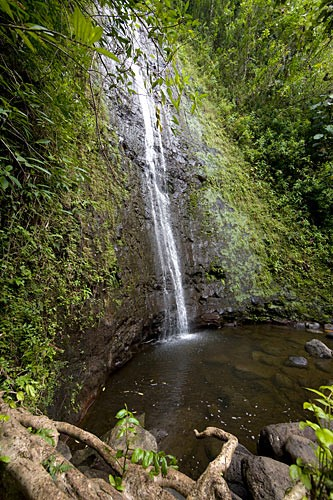 beatiful manoa falls waterfall in honolulu