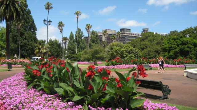 flowers in albert park auckland