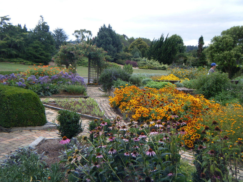 flowers in auckland botanic gardens