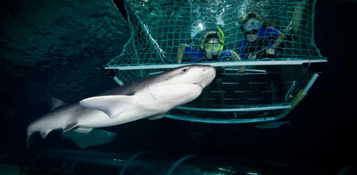 kelly tarlton's sea life aquarium in auckland