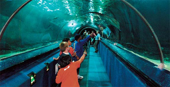Kelly Tarltons Sea Life Aquarium VISIT ALL OVER THE WORLD