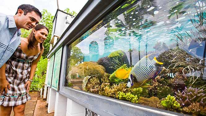 waikiki aquarium inside