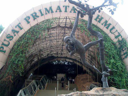 primate-centre-in-ragunan-zoo