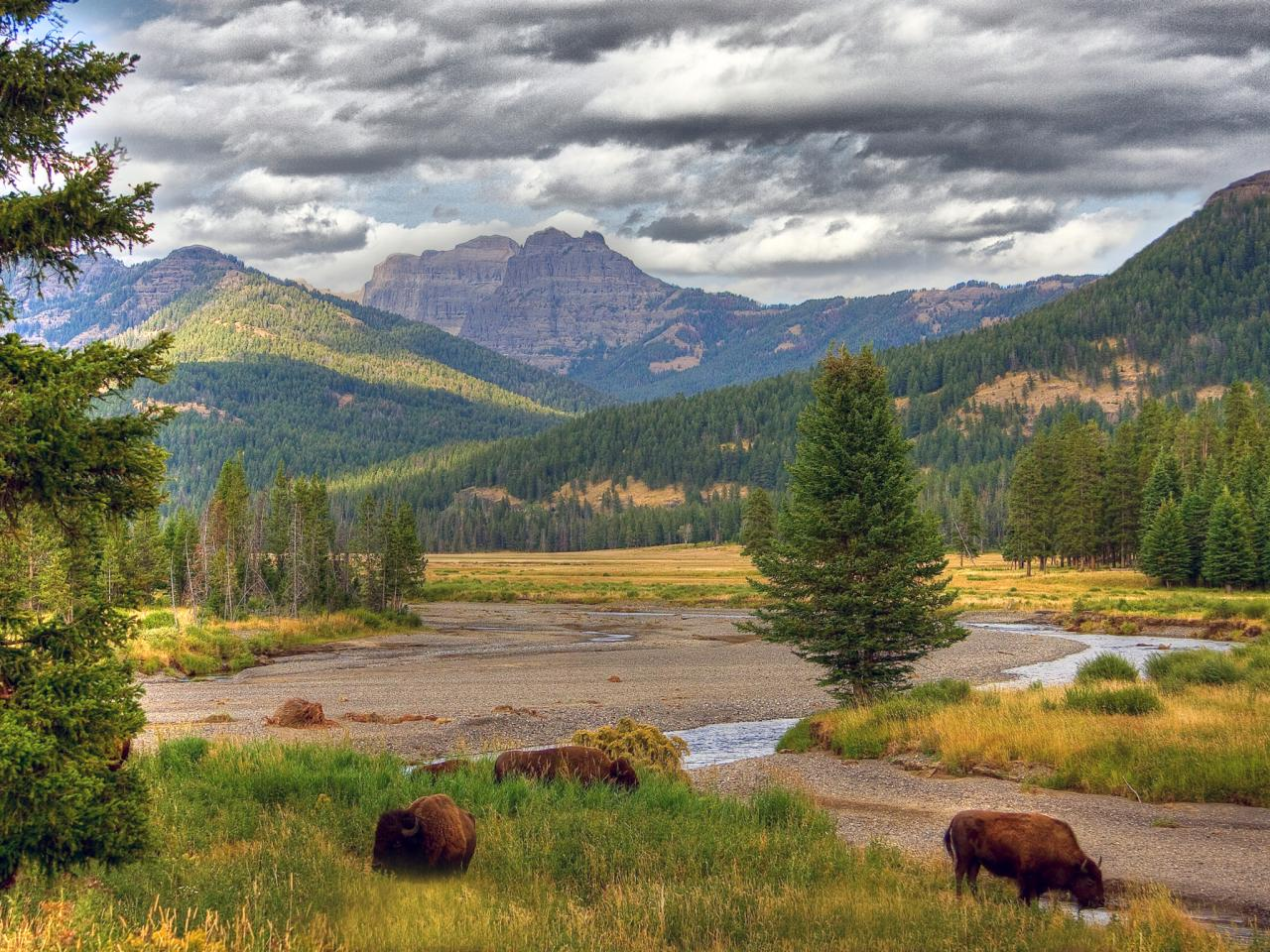 Yellowstone National Park USA