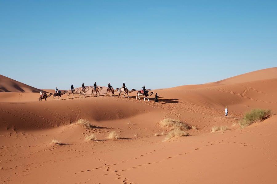 A group of camel riders touring the desert