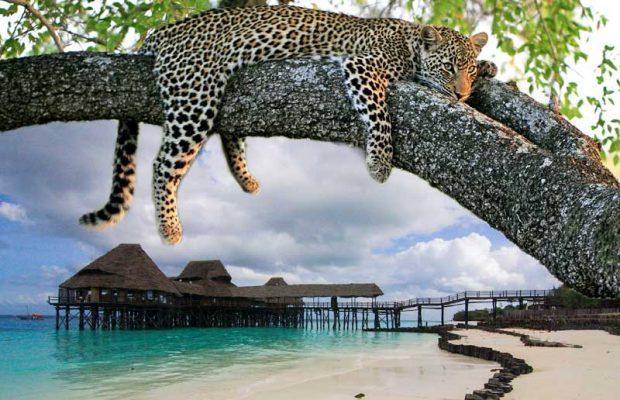 Zanzibar-Safari