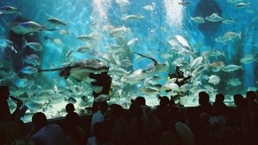 Melbourne Aquarium Fishes