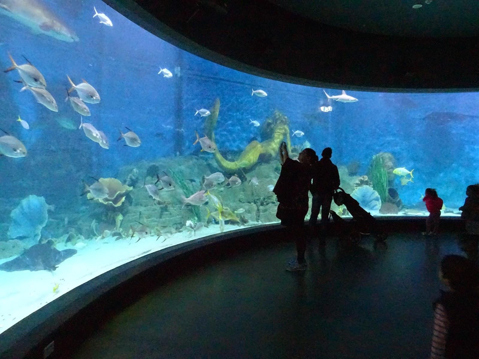 Melbourne Aquarium inside