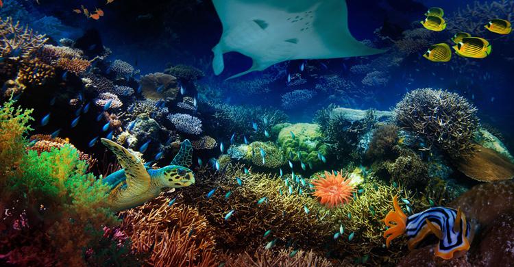 Melbourne Aquarium sea creature