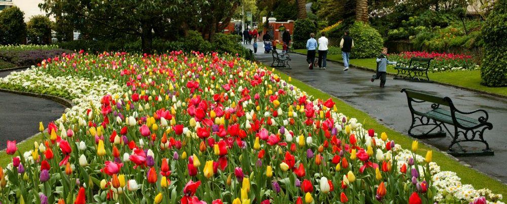 Tulips-in-Wellington-Botanic-Garden