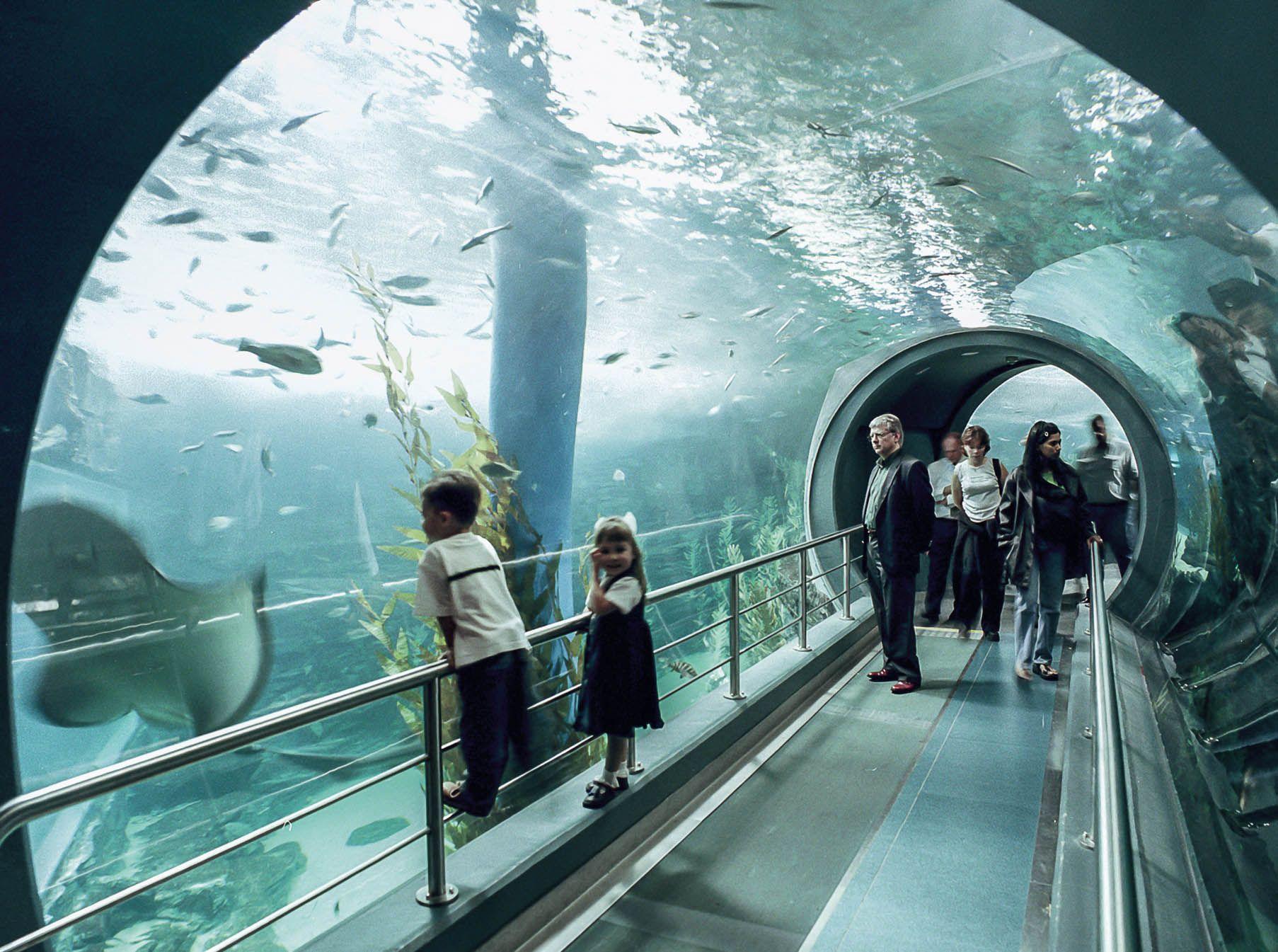 Kelly Tarlton S Sea Life Aquarium Visit All Over The World