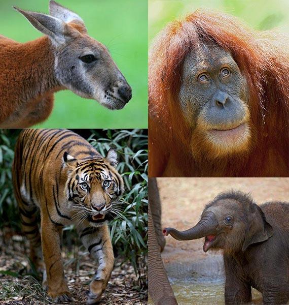 melbourne-zoo-animals