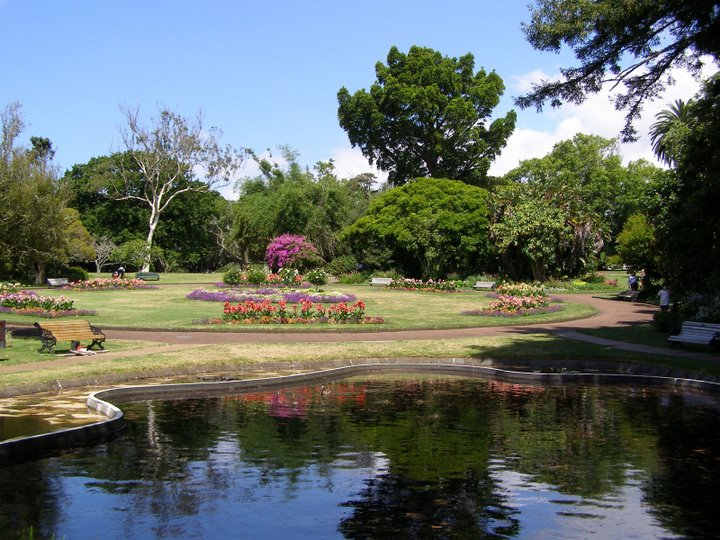 beautiful auckland domain park