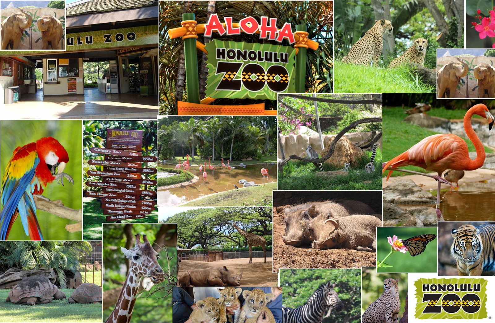 different animals in honolulu zoo