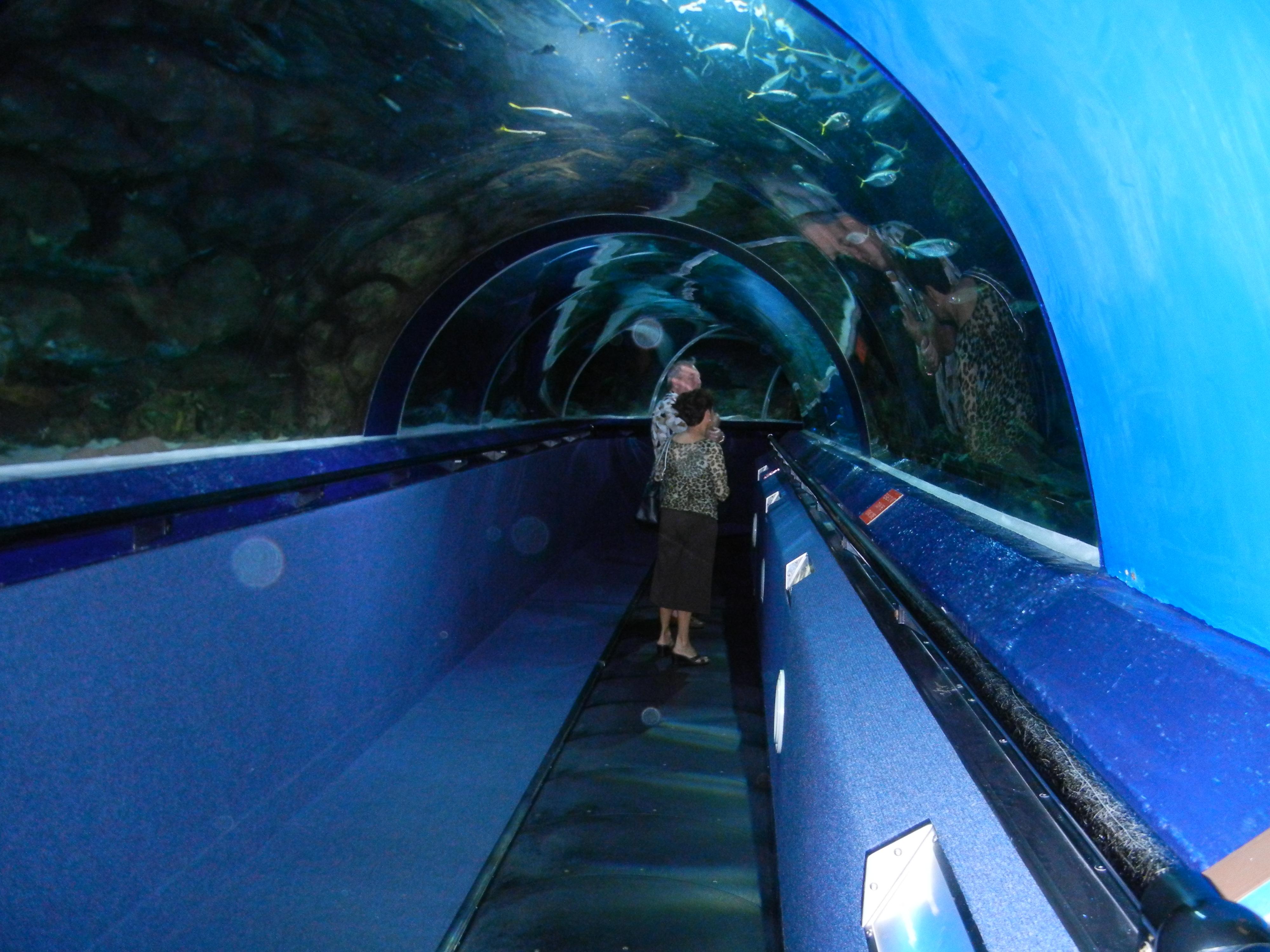 kelly tarlton's sea life aquarium in auckland, new zealand