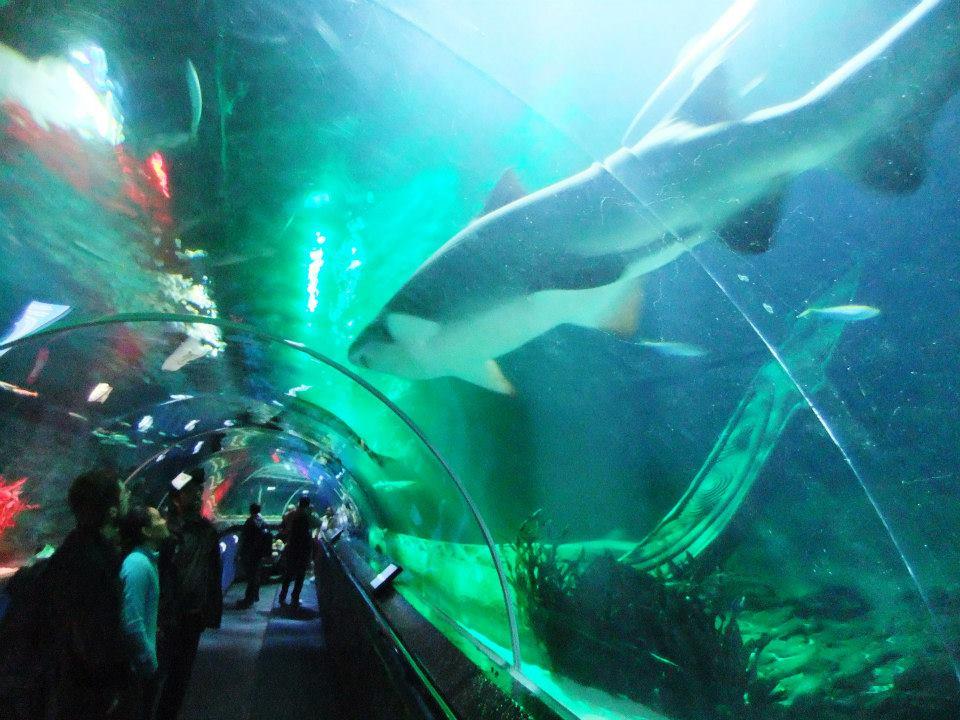 kelly tarlton's sea life aquarium tunnel