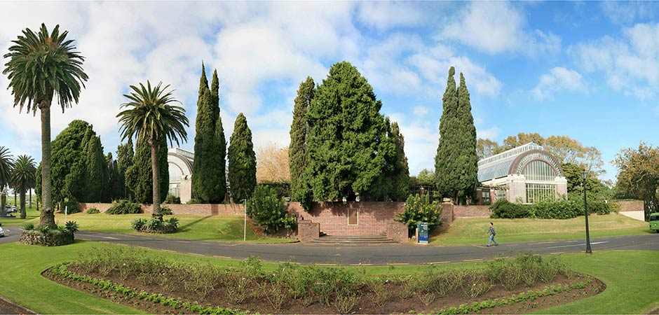 trees in auckland domain park