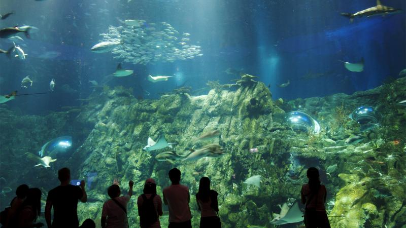 hong kong ocean park aquarium