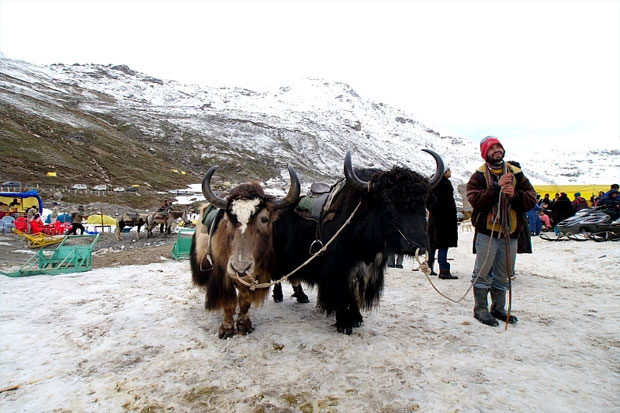 rohtang-pass-05