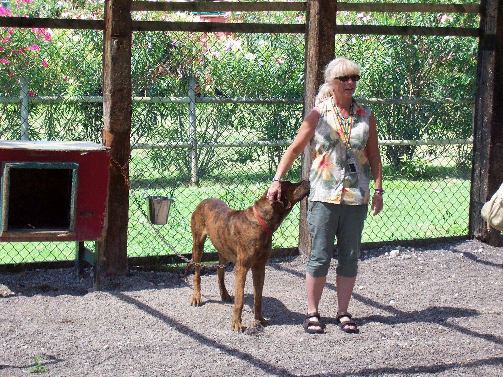 Chukka Cove Farm's DogSled Tours